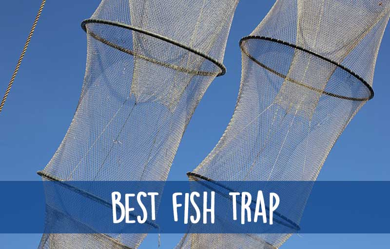 Best Fish Trap: Crawfish Trap & Minnow Trap